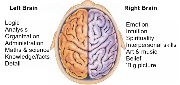 Different functions of left and right brain